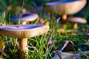 Mystical mushrooms