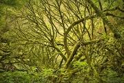 Artistic_DFX3707_3709_HDR_1140x758_Q80-Van-Gogh-II